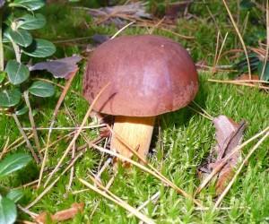 Польский гриб на полигоне Десна