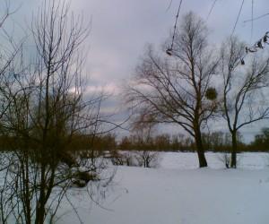Деревья на берегу реки Десна