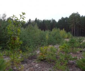 Лес в с. Евминка