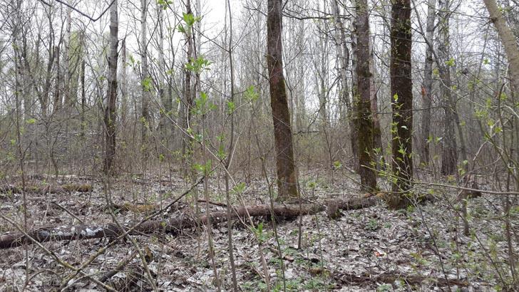 лес в апреле