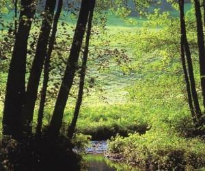 В прохладных и влажных пойменных лесах грибы можно найти и жарким летом