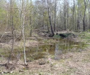 Лес у Троещины