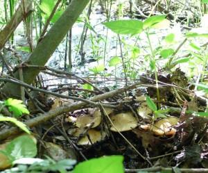 Майские грибы