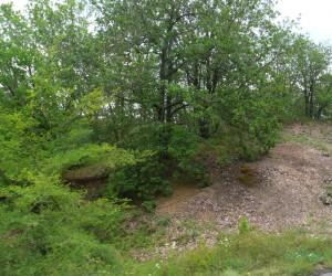 Дубовая рощица у с. Щебетовка в горном Крыму