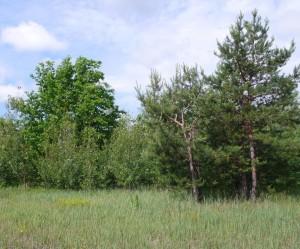 Смешанный июньский лес