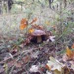 Ещё такой белый гриб