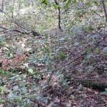 Лес с опятами. Вот так и мучаемся…