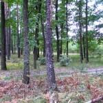 Лес в районе с. Старое
