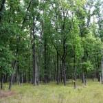 Дубовый лес, с. Старое