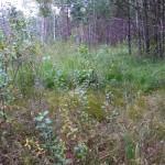 Густая трава