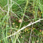 Грибы в траве