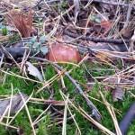 Ещё польский гриб
