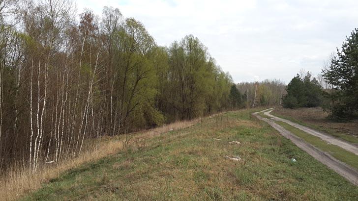 Лес на окраине Киева, в котором весной  растут сморчковые грибы