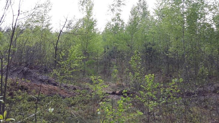 В этом лесу мы находили подберёзовики