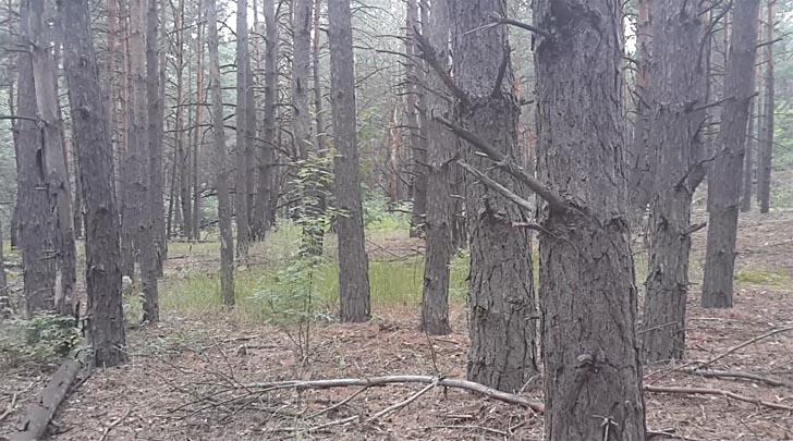 Приятный лес у с. Калиновка