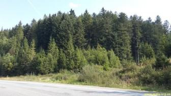 Грибной лес в Карпатах