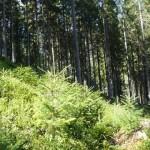 Лес в Манчиловском