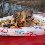 Первые грибы 2015-го года