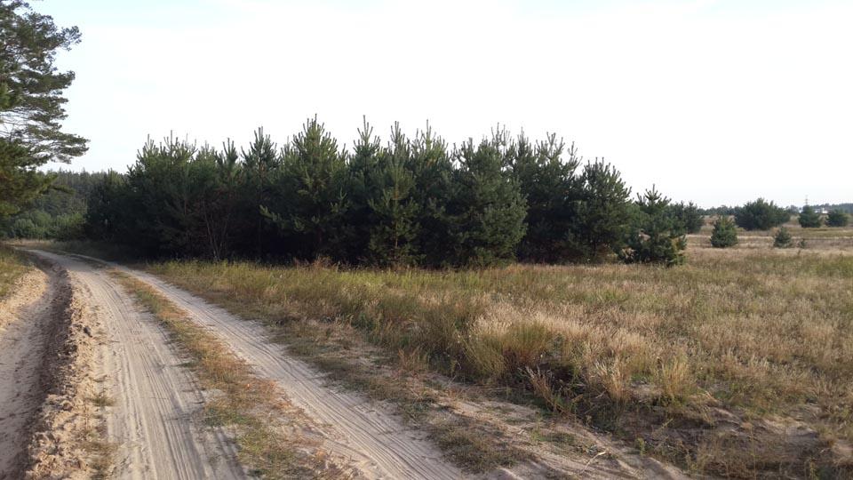 Места произрастания грибов Маслят в Залесье