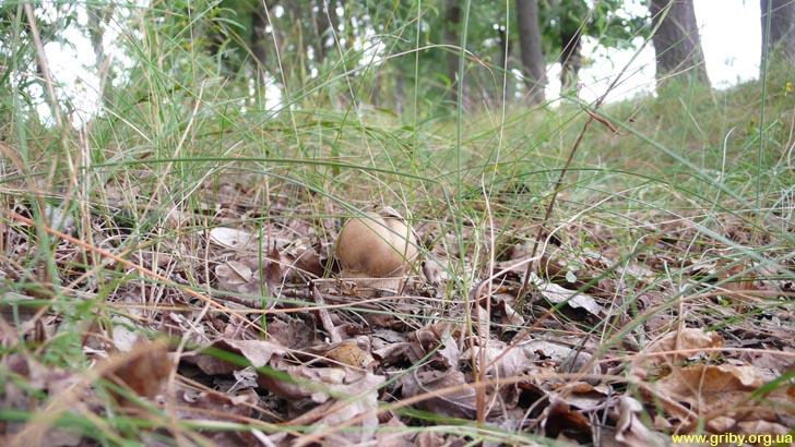 Белый гриб в июле