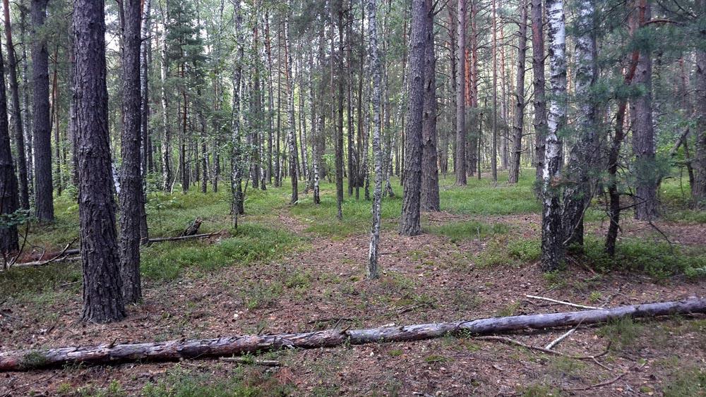 Грибной лес в жару