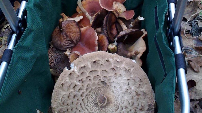 Припозднившиеся осенние грибы в декабре
