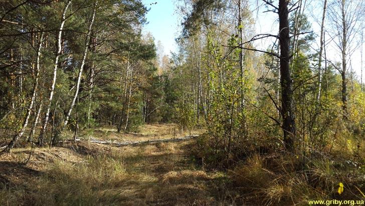 Грибной лес в октябре