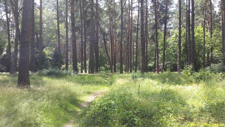 Лес в июне